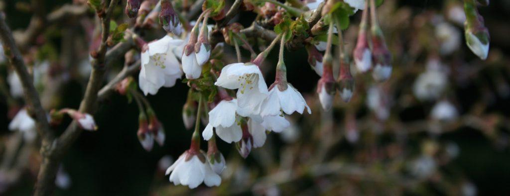 forår i blomst